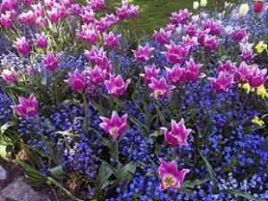 bloemenperk met tulpen
